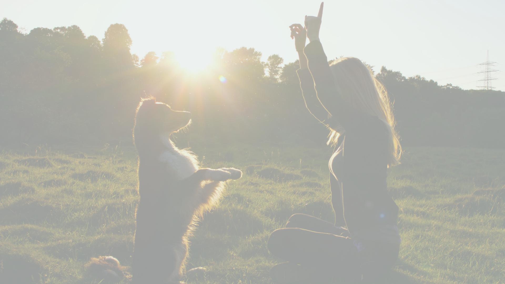 Duurzaam hondenleven