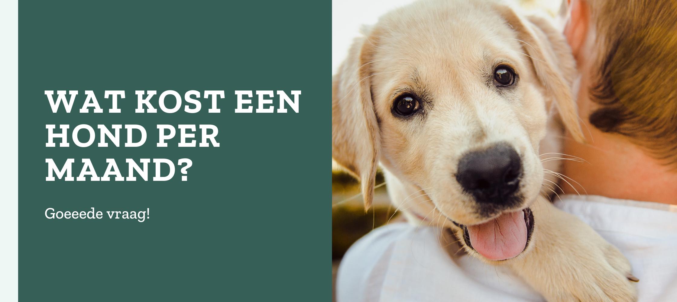 Wat kost een hond?