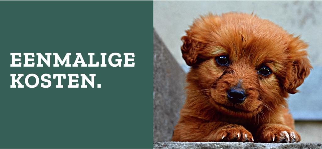 Aanschafkosten van een hond