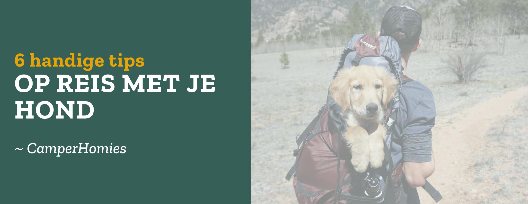 Op reis met je hond - 6 handige tips